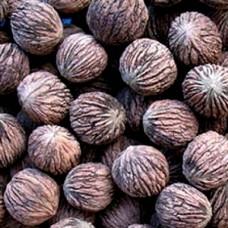 Горіх чорний, насіння, 10 шт