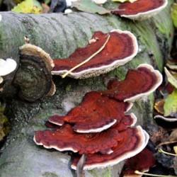 Світ грибів України