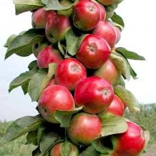 """Колоновидна яблуня """"Тріумф"""""""