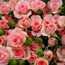 """Спрей-троянда """"Наталі"""""""